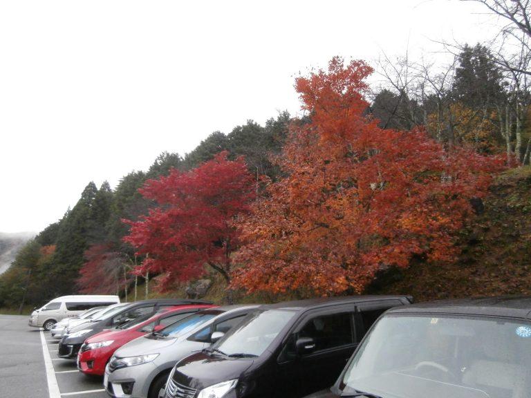 大阪自由行-日本機加酒-大阪景點-停車場竟然有咁多紅葉