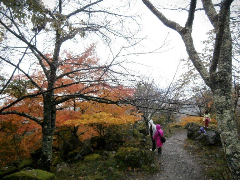 大阪自由行-日本機加酒-大阪景點-明明未到紅葉季節,但沿途都開始有紅葉