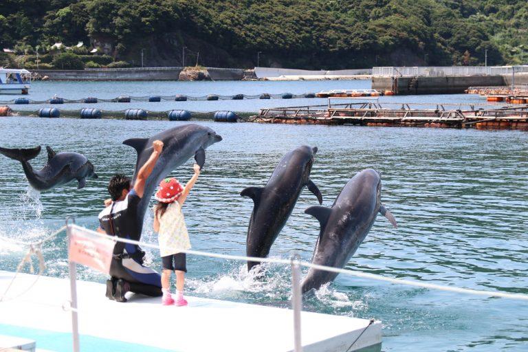 九州自由行-福岡自由行-給孩子跟海洋生物來個近距離接觸