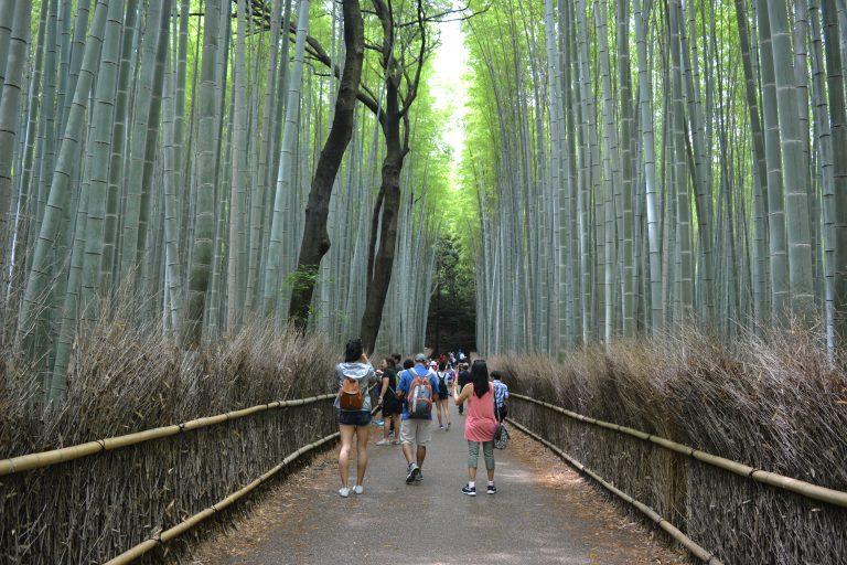 竹林小徑-京都自由行-京都景點-大阪自由行-大阪景點