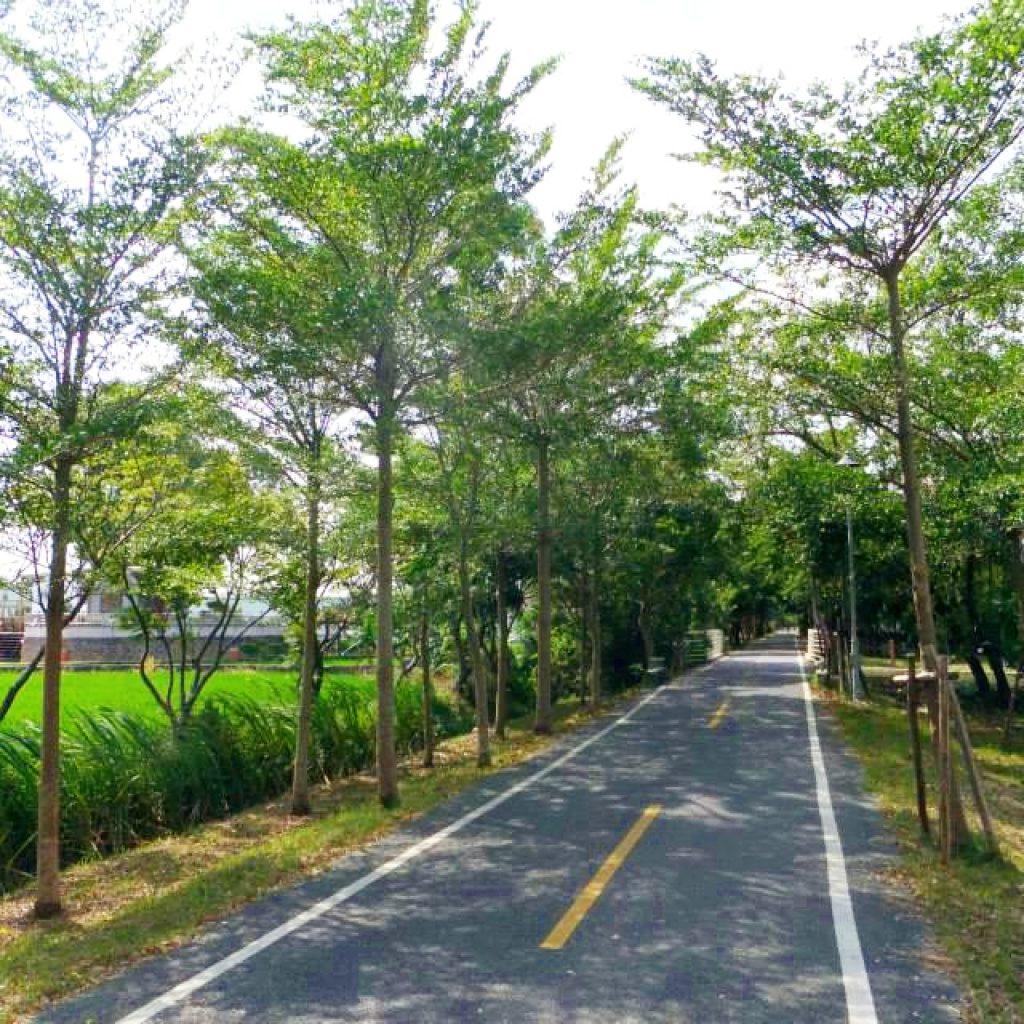 台中自由行-台中好去處-台灣自由行-大樹組成綠色隧道不怕太曬人又少