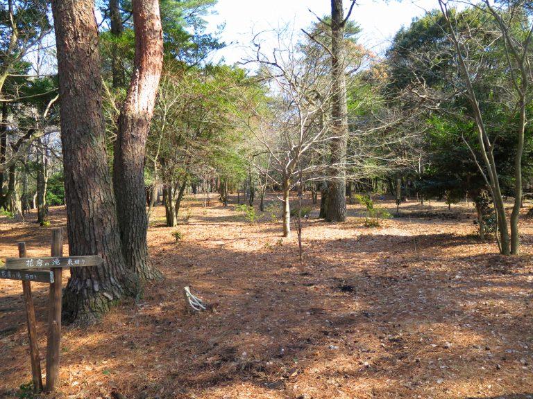 九州自由行-鹿兒島自由行-日本機加酒-沿途走過叢林呼吸著新鮮的空氣