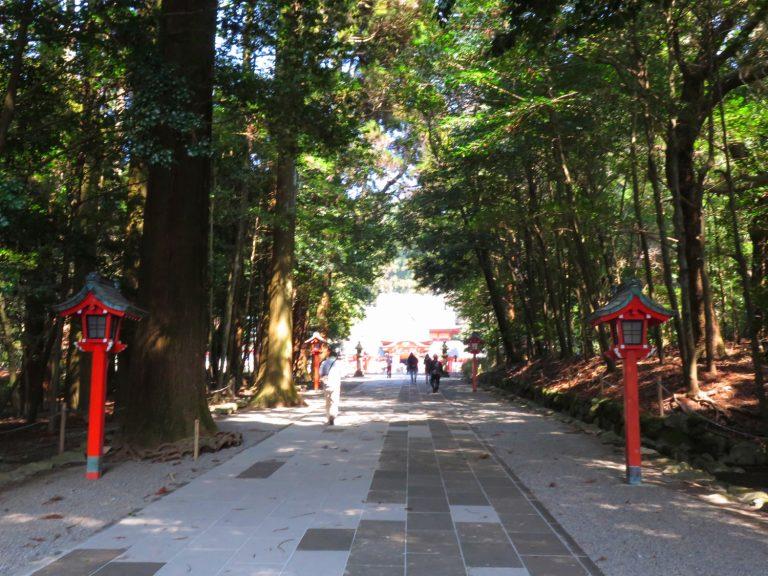九州自由行-鹿兒島自由行-日本機加酒-神宮外的杉木又高又大原來已有超過700歲之樹齡