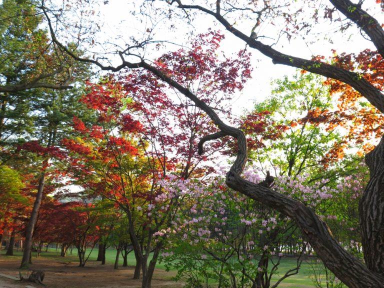 首爾自由行-韓國自由行-韓國旅遊-首爾景點-韓國機票-南怡島種植了很多不同的植物,四季都有不同的顏色