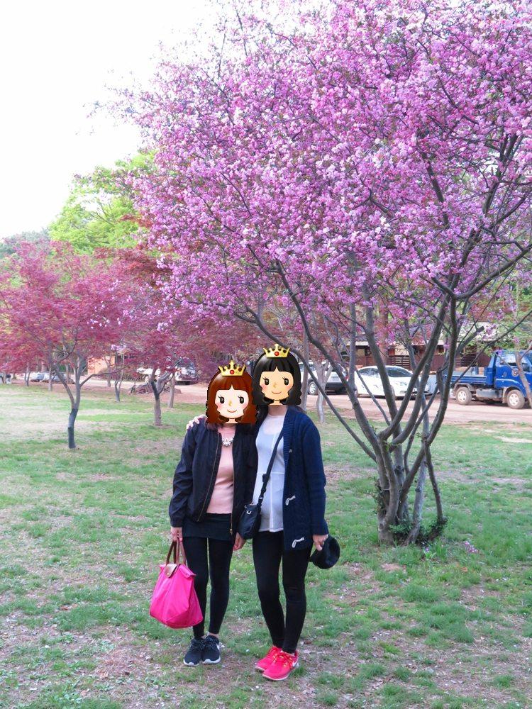 首爾自由行-韓國自由行-韓國旅遊-首爾景點-韓國機票-想不到島上仍有不少紅色及粉紅色