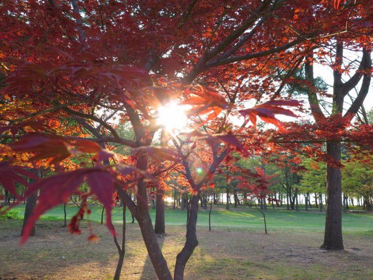 首爾自由行-韓國自由行-韓國旅遊-首爾景點-韓國機票-突如其來的一陣風,望著紅葉,竟有一點秋意