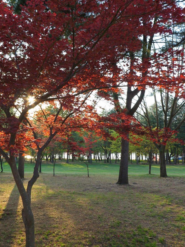 首爾自由行-韓國自由行-韓國旅遊-首爾景點-韓國機票-小島地方不大,適合大家悠閒的野餐、拍拍照