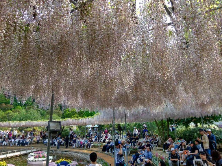 足利花卉公園-日本自由行