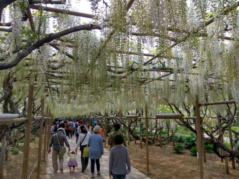 花卉公園-日本自由行