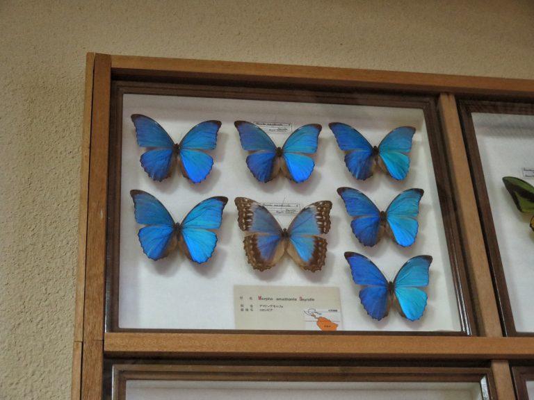 九州自由行-鹿兒島自由行-日本機加酒-福岡自由行-福岡景點-博物館的另一邊為昆蟲館,有興趣可以一睇
