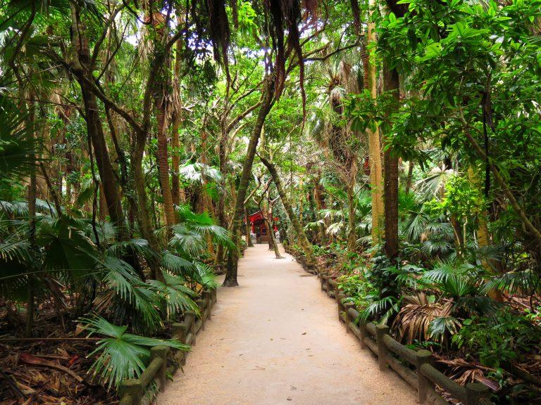 九州自由行-鹿兒島自由行-日本機加酒-島中央滿是熱帶及亞熱帶植物的樹林,紅色的是元宮,正是青島神社原本的宮殿所在地