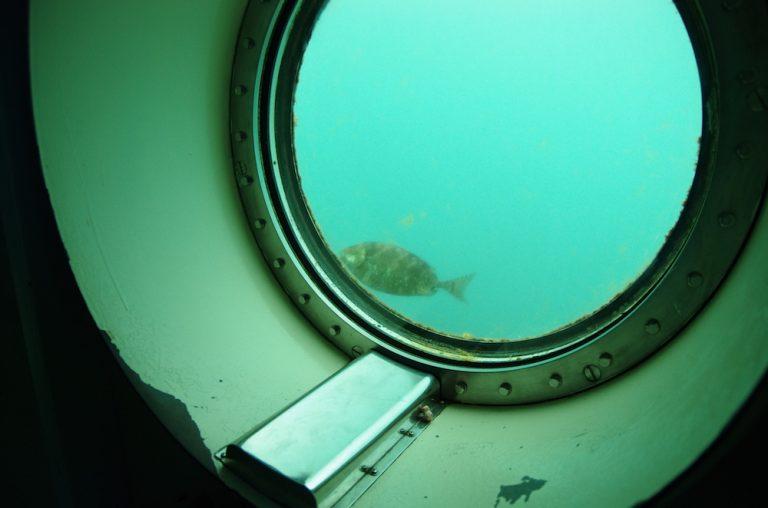 大阪自由行-大阪景點-觀賞到海中多種魚類