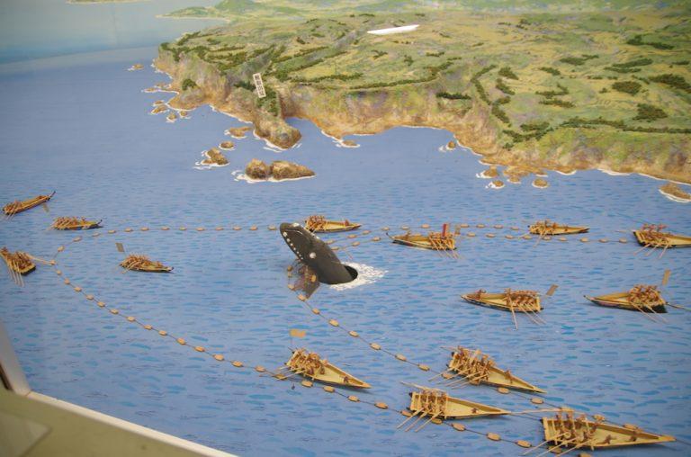 大阪自由行-大阪景點-捕鯨的經過