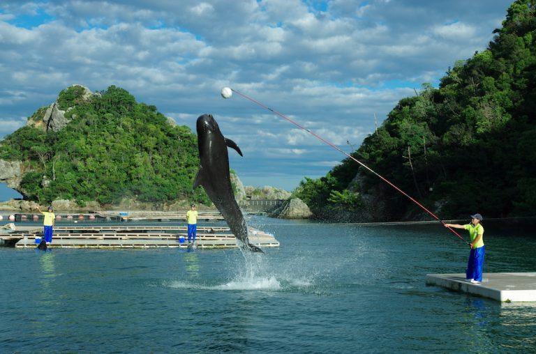 大阪自由行-大阪景點-海豚和鯨魚表演