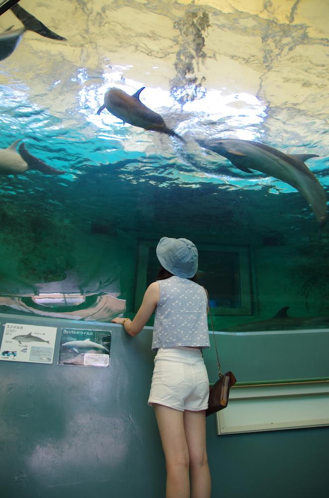 大阪自由行-大阪景點-魚類博物館