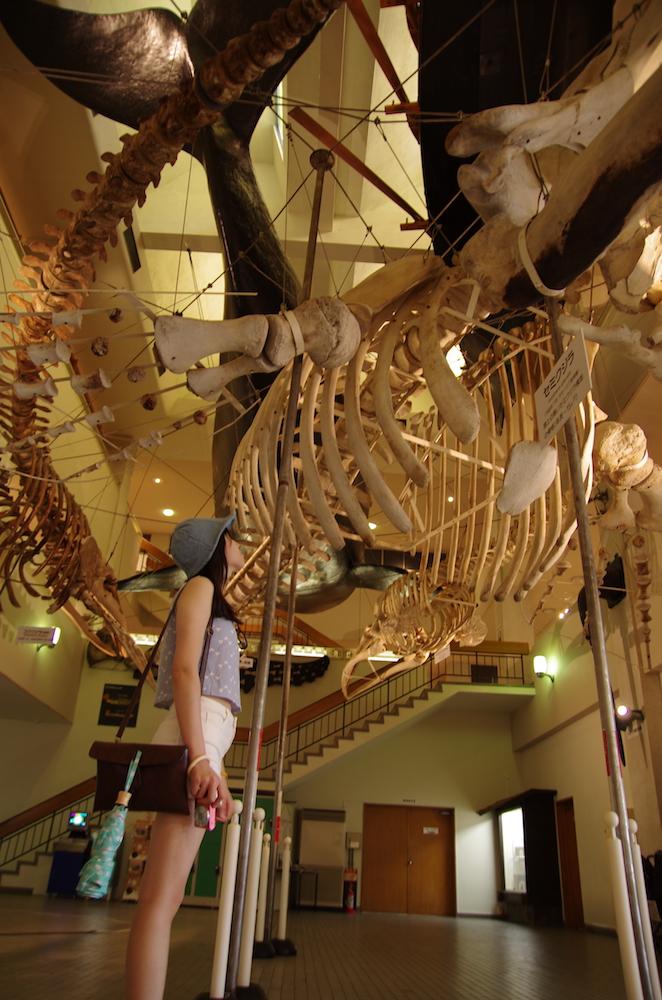 大阪自由行-大阪景點-鯨魚化石