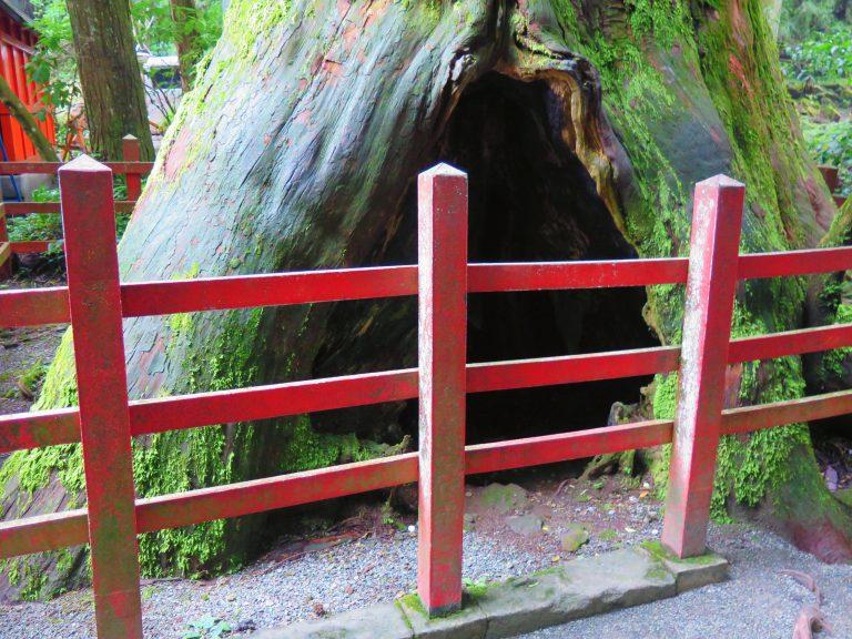 東京自由行-東京必去-東京景點-東京旅遊-是可以告解的樹洞嗎