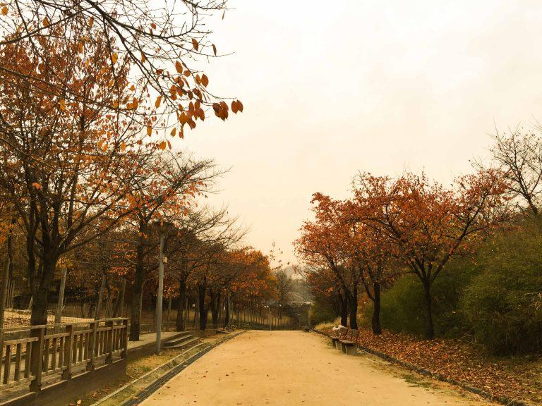 韓國自由行-韓國市區-韓國近郊-首爾好去處-首爾大公園3