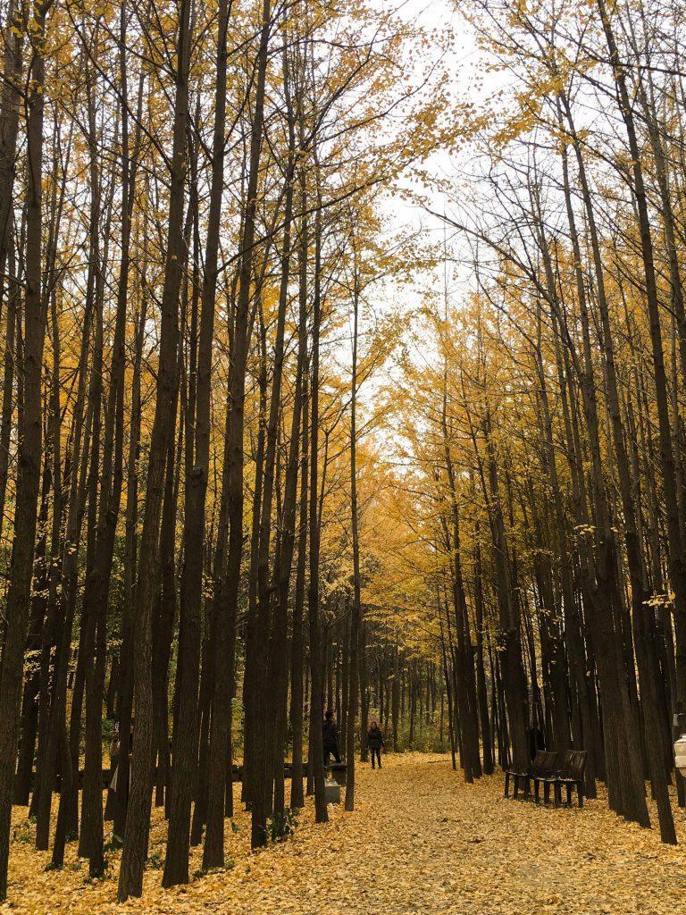 韓國自由行-韓國市區-韓國近郊-首爾好去處-首爾大公園2