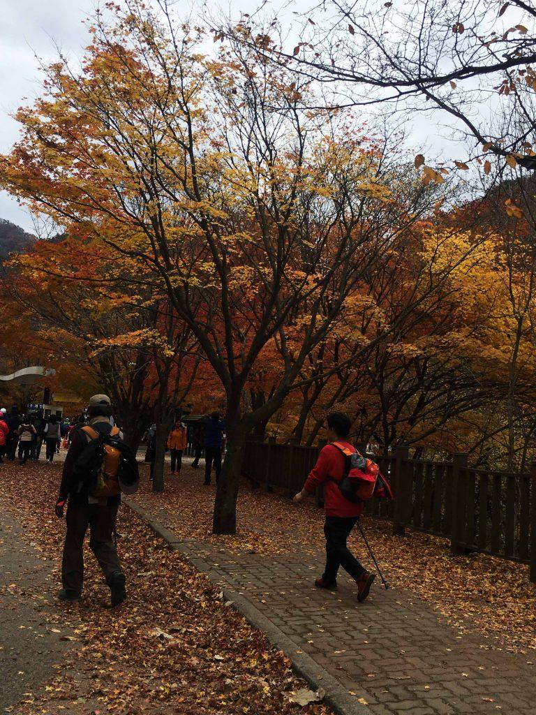 韓國自由行-韓國市區-韓國近郊-首爾好去處-南怡島