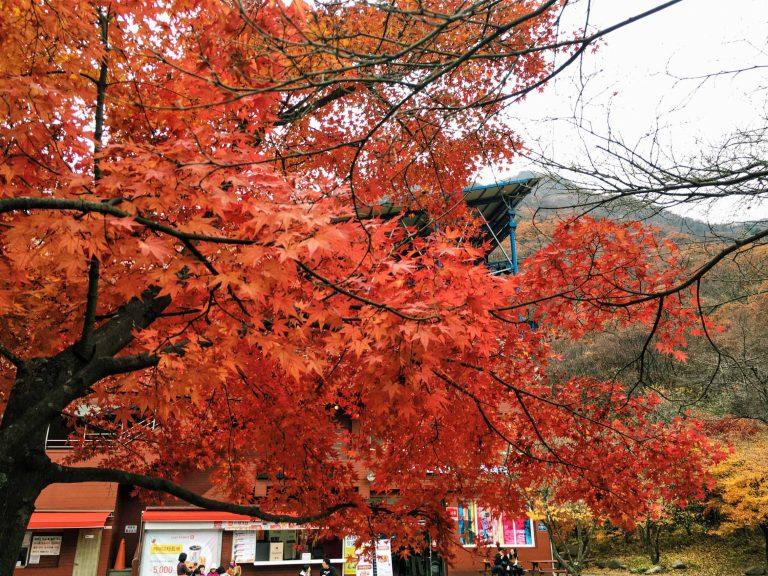 韓國自由行-韓國市區-韓國近郊-首爾好去處-內藏山2