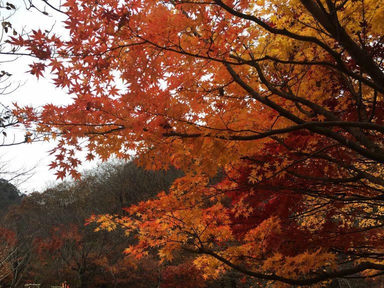 韓國自由行-韓國市區-韓國近郊-首爾好去處-內藏山
