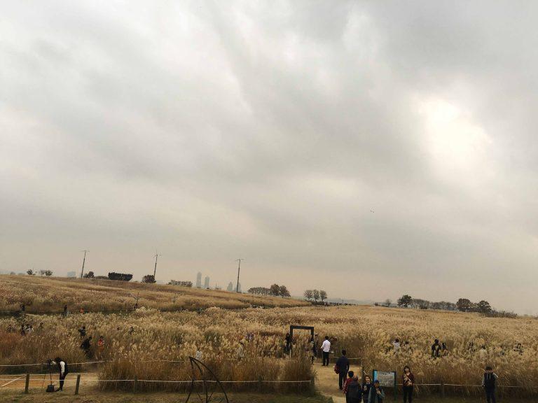 韓國自由行-韓國市區-韓國近郊-首爾好去處-天空公園芒草2