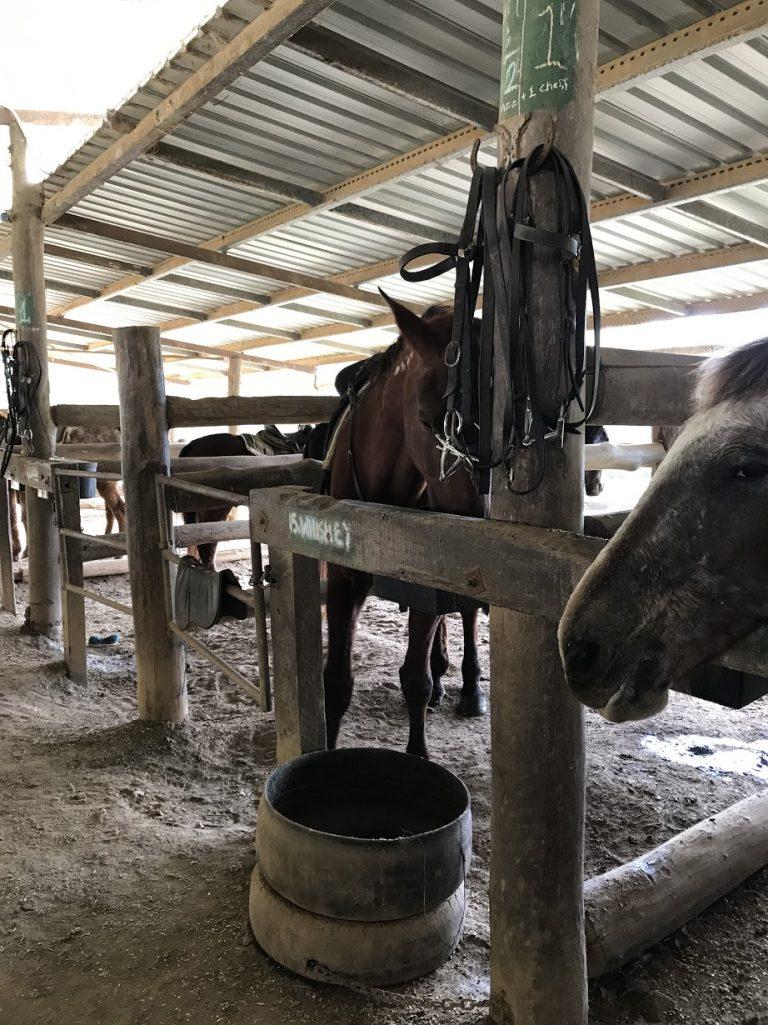 跟馬兒聊聊天-澳洲旅遊-澳洲自由行