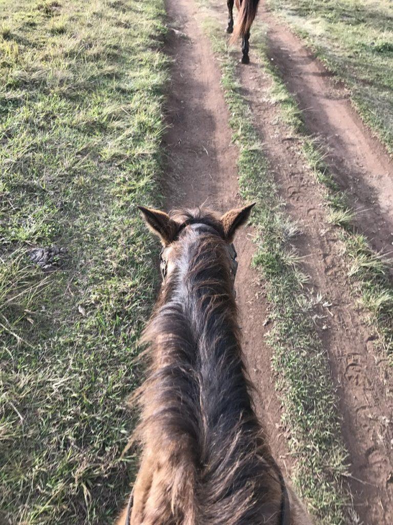 兩小時的旅程坐在馬背上-澳洲旅遊-澳洲自由行