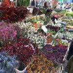 騎行倫敦(一)倫敦自由行哥倫比亞路花市 Columbia Road Flower Market