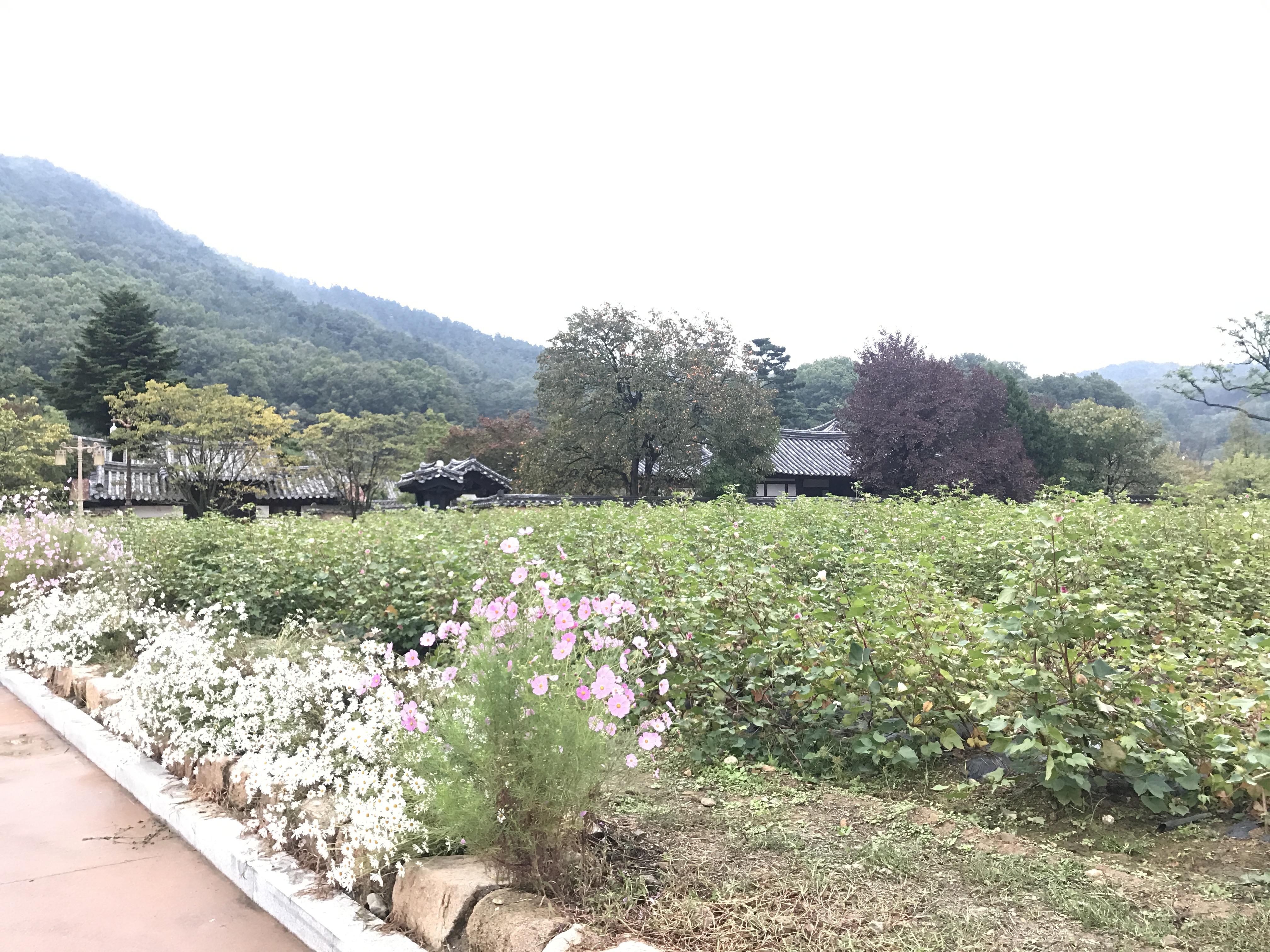 韓國自由行-韓國旅遊-韓國機票-南平文氏本裡世區地
