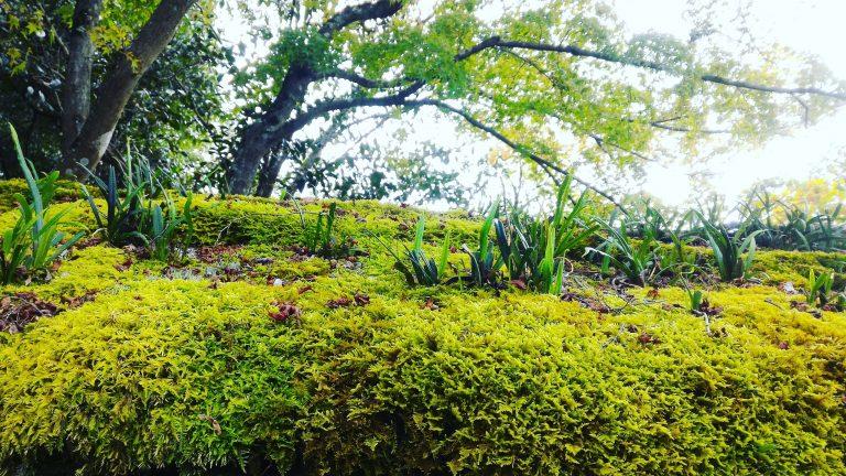 京都自由行-京都景點-京都住宿-大阪自由行-金閣寺