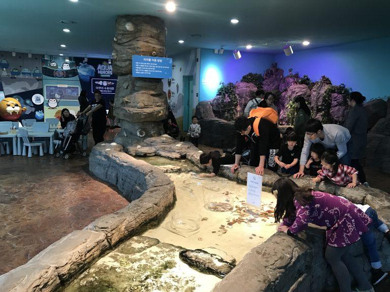一山韓華水族館-首爾近郊一山-韓國旅遊-韓國機票-首爾自由行
