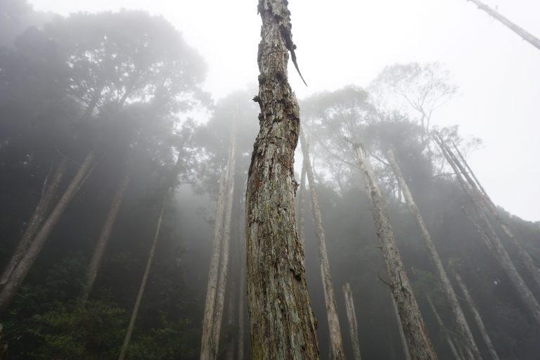 台中自由行-忘憂森林-霧