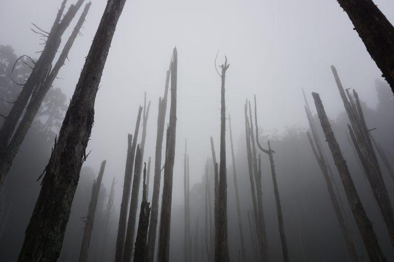 台中自由行-忘憂森林-霧林