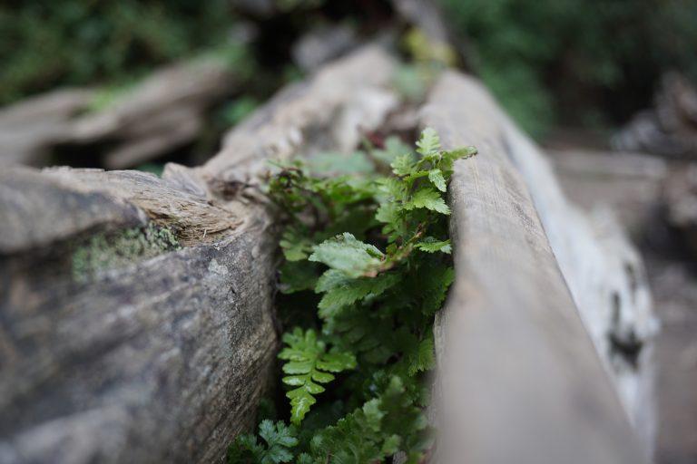 台中自由行-忘憂森林-草