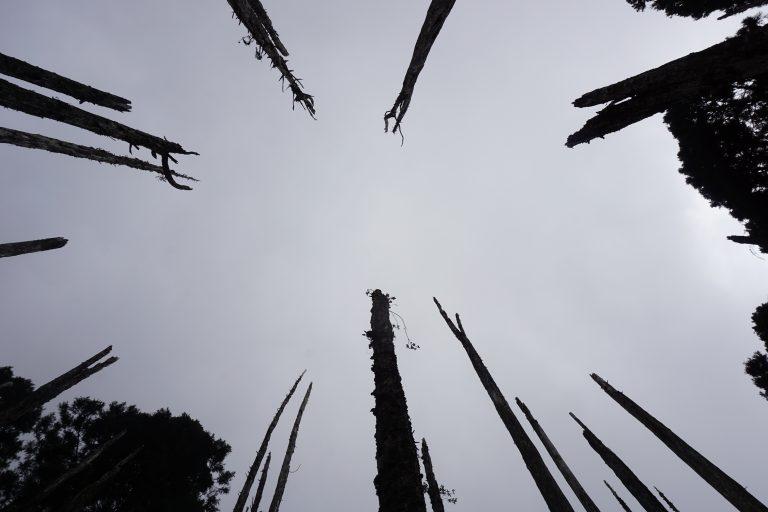 台中自由行-忘憂森林-魔法
