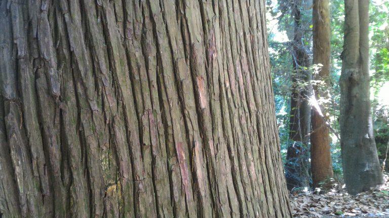 東京自由行-東京機票-東京旅遊-東京景點-東京住宿-東京必去-沿途都是古老巨木
