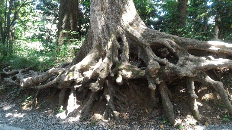 東京自由行-東京機票-東京旅遊-東京景點-東京住宿-東京必去-老Tree的Gun形態優美
