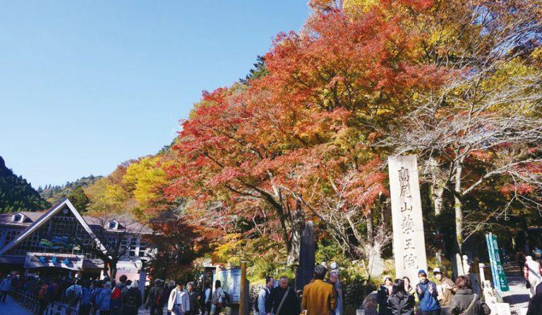 東京自由行-東京機票-東京旅遊-東京景點-東京住宿-東京必去-秋季有紅葉
