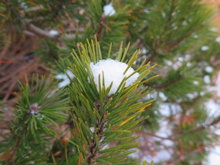 北海道自由行-北海道旅遊-北海道旅遊景點-躲在葉子中的雪,有趣