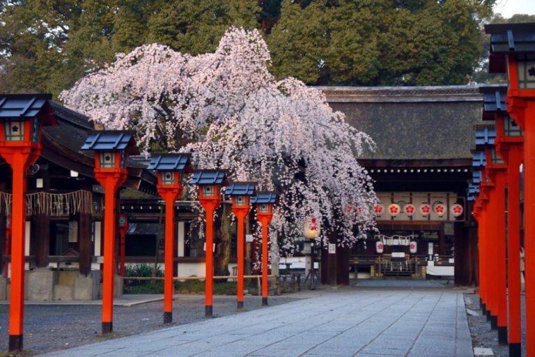 【京都賞櫻半日遊】平野神社・哲學之道河畔散步