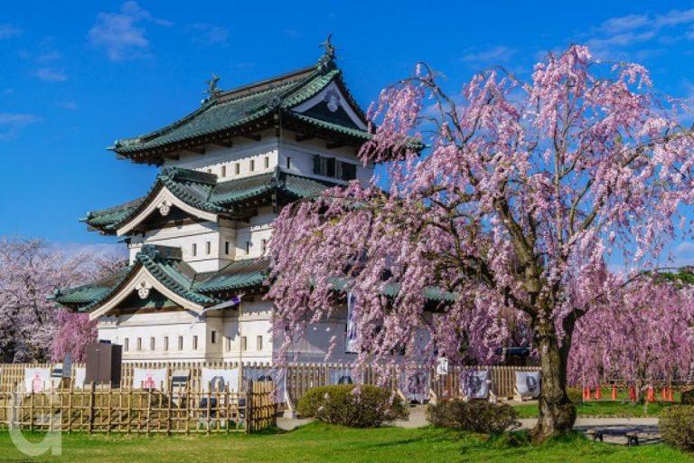 【青森賞櫻半日遊】八甲田雪壁走廊・弘前公園賞櫻花