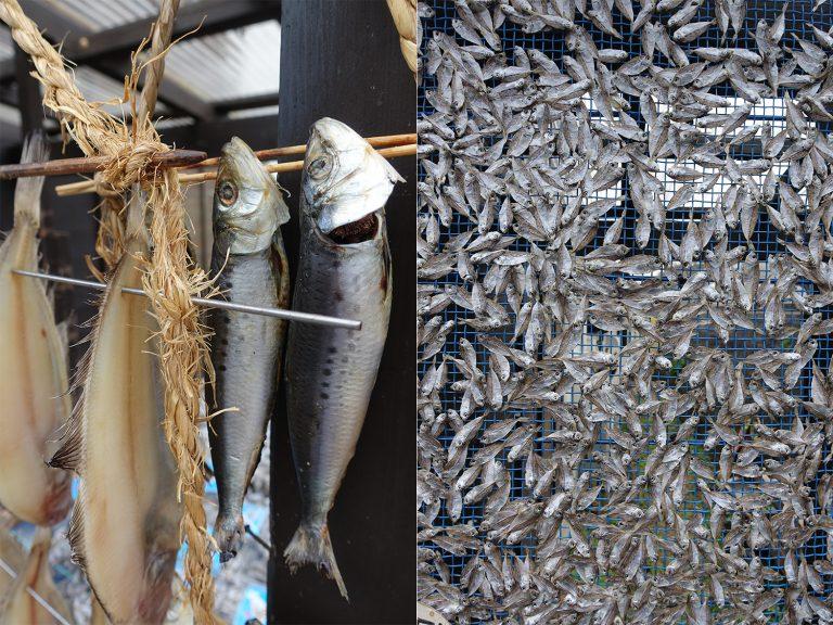 京都自由行-京都景點-不同種類的魚乾