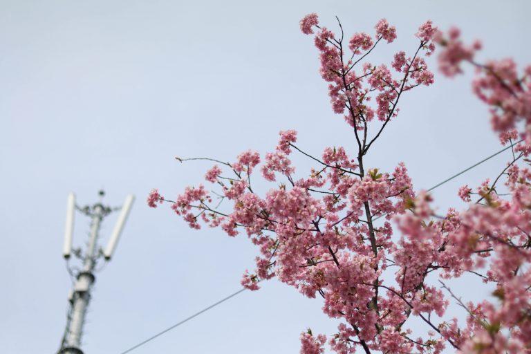 nokonoshima.com_09_goflyla