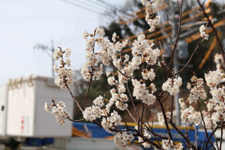 nokonoshima.com_15_goflyla