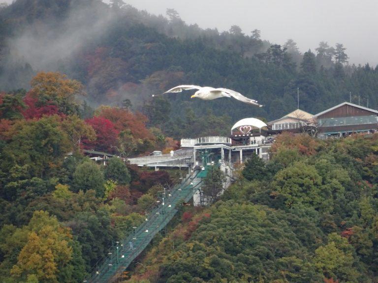 京都自由行-京都景點-從天橋立仰望傘松公園