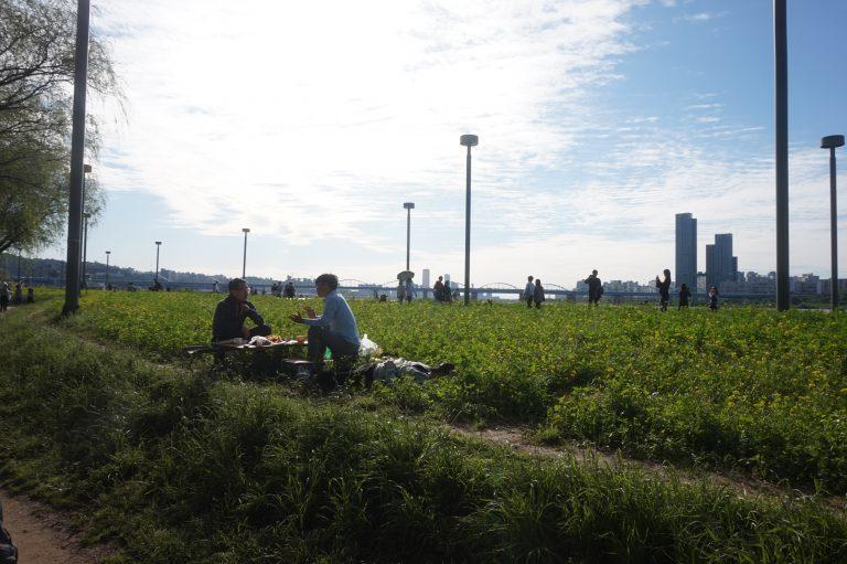 首爾自由行-首爾景點-韓國自由行-韓國旅遊-漢江瑞來島油菜花節