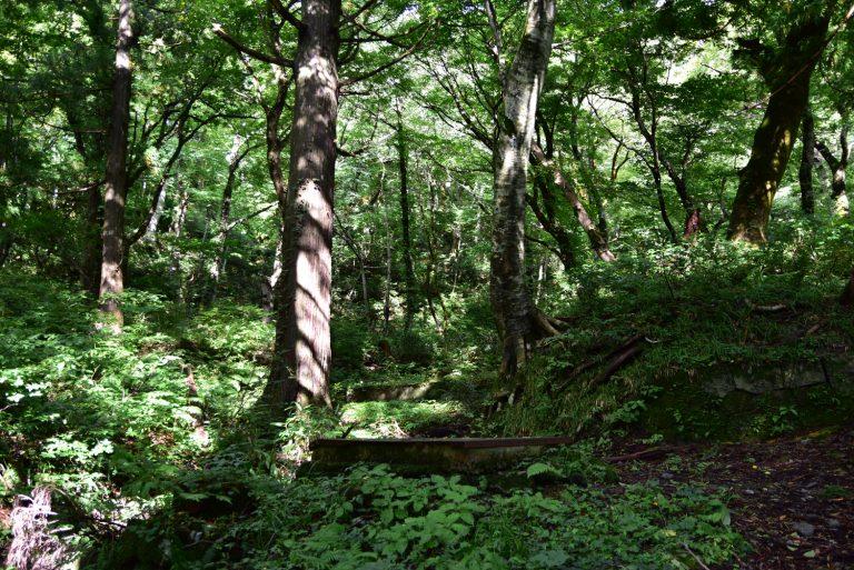 鳥取自由行-這段參道如走進樹林當中,時而有些鳥聲、蟲鳴,令人心情發鬆