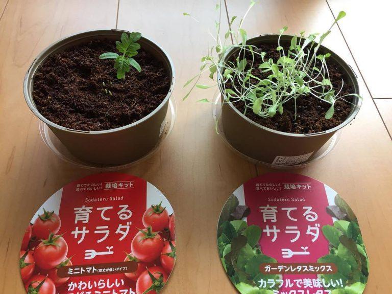 sodateru-salad